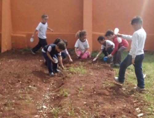 Horta na Escola