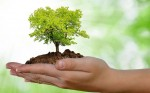 O Dia Mundial do Meio Ambiente é comemorado  em todos anos anos no dia 5 de junho (Imagem: Divulgação)