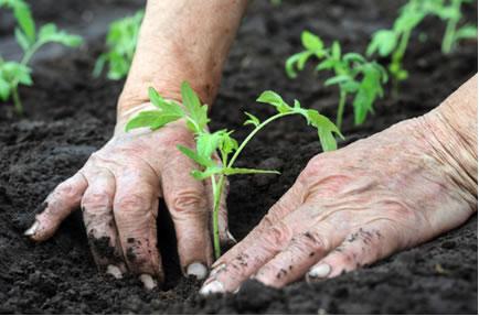 Evento consiste em concentrar ações e iniciativas simultâneas pela educação ambiental e pelo desenvolvimento sustentável da agricultura (Foto: Divulgação)