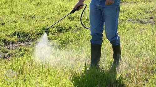 Agrotóxicos trazem riscos à saúde e ao meio ambiente (Foto: Divulgação)