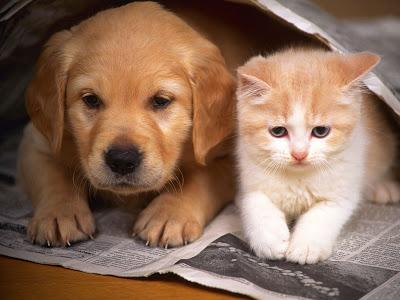 O objetivo é prevenir o câncer em cadelas e gatas