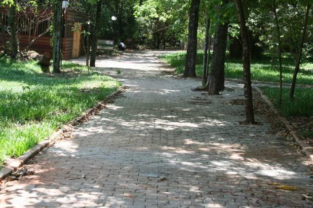 Entre as mudanças solicitadas pelo Comdema, pavimentação em volta do tronco de árvores é uma delas (Foto: Divulgação/Site da Prefeitura de Jaboticabal)