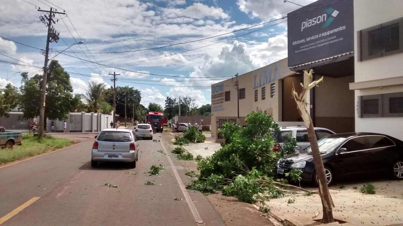 Caminhão bateu em árvore e continuou prosseguindo até se chocar contra o portão (Foto: Eliel Vieira)