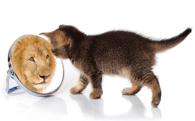 O Leão miou