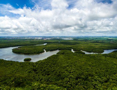 Não à internacionalização da Amazônia