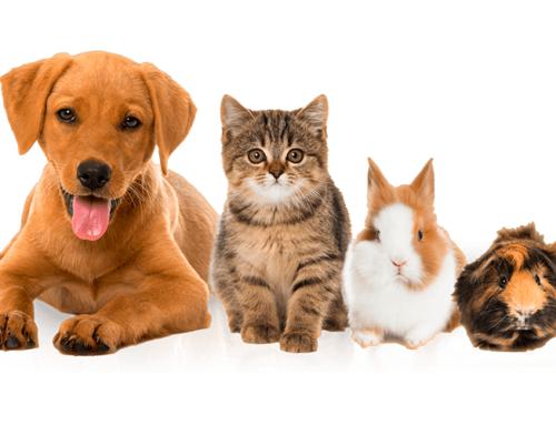 Farmácia PET Solidária: Entenda o que é essa novidade que uma vereadora e a diretora do departamento de proteção animal pensam