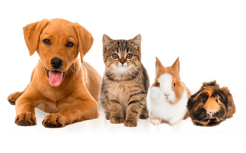 Veterinário fala sobre o coronavírus em animais de estimação