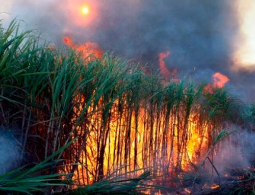Incêndios na região causam danos, fumaça e muito transtorno à população; Corpo de Bombeiros de Jaboticabal comenta